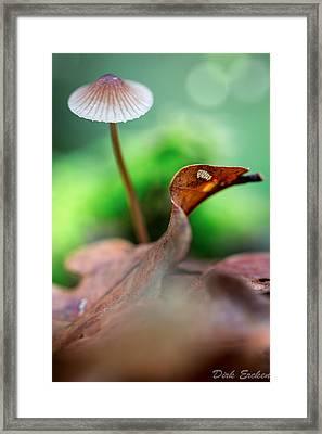 Mushroom Mycena Sp. Framed Print by Dirk Ercken