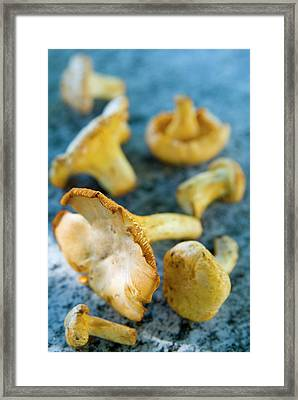 Mushrooms, Chanterelles, (cantharellus Framed Print by Nico Tondini