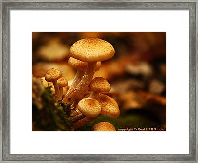 Mushrooms Of Fall Framed Print