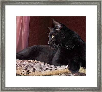 My Boy Charlie Framed Print
