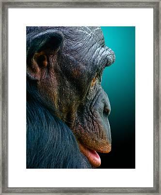 My Good Side Framed Print by Brian Stevens