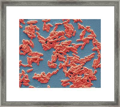 Mycobacterium Leprae Framed Print