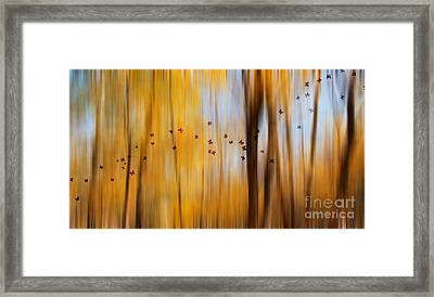 Mystic Forest Framed Print by Rima Biswas