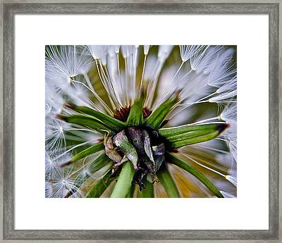 Mystical Magical Dandelion Framed Print by Frozen in Time Fine Art Photography