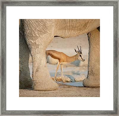Namibia, Etosha National Park, Nebrowni Framed Print