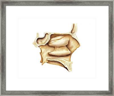 Nasal Cavities Framed Print