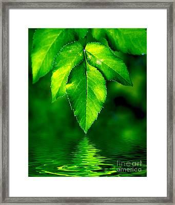 Natural Leaves Background Framed Print