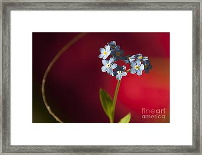 Nature Abstract Framed Print by Svetlana Sewell