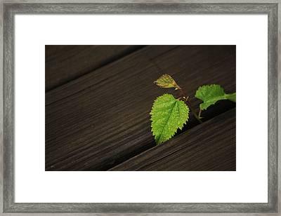 Nature Finds A Way Framed Print