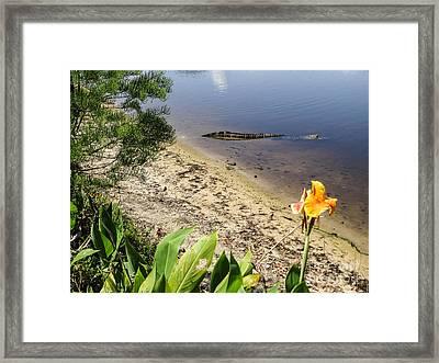 Nature In Florida Framed Print