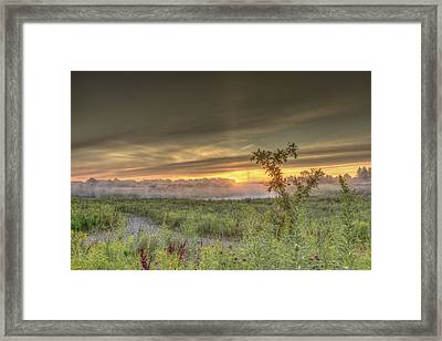 Nature In The Morning Framed Print by Nick Mares