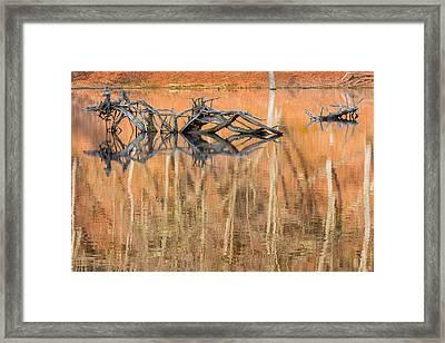 Nature Made Framed Print