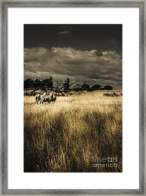 Nature Photo Of Tasmanian Countryside In Australia Framed Print by Jorgo Photography - Wall Art Gallery