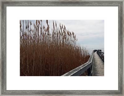 Framed Print featuring the digital art Nature Walk by Kelvin Booker