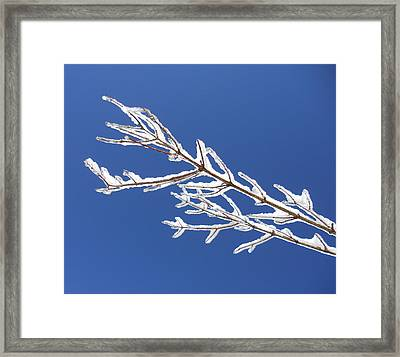 Winter's Icing Framed Print by Diannah Lynch