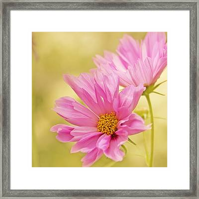 Nature's Song Framed Print by Bonnie Bruno