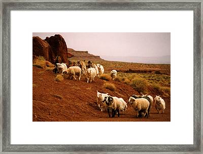 Navajo Sheep Framed Print
