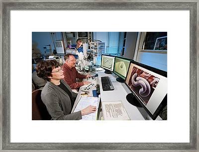 Nematode Research Framed Print