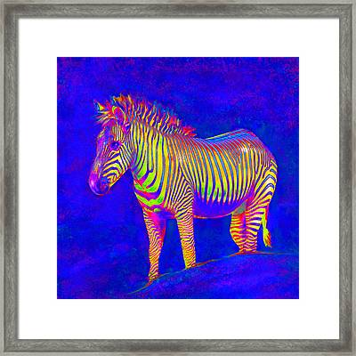 Framed Print featuring the digital art Neon Zebra 2 by Jane Schnetlage