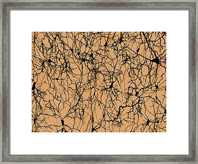 Nerve Cells Framed Print