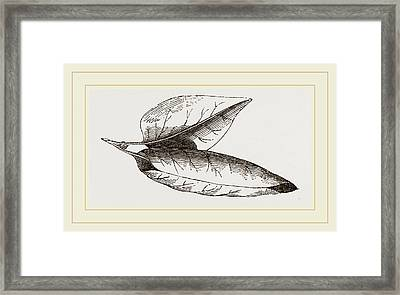 Nest Of Lilac-leaf-roller Framed Print by Litz Collection