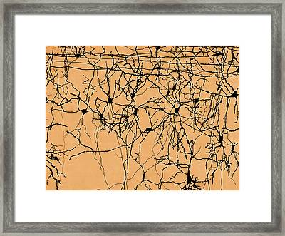 Neuron Network Framed Print