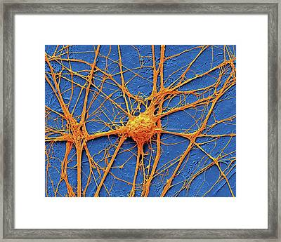 Neurone Framed Print