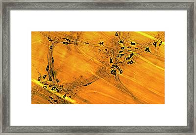 Neurons Framed Print by Microscape
