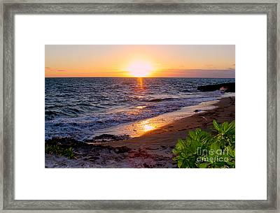 New Day Framed Print by Carey Chen
