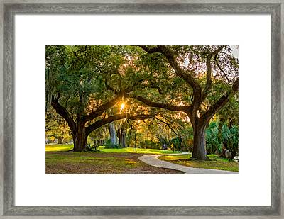 New Orleans - City Park  Framed Print by Steve Harrington