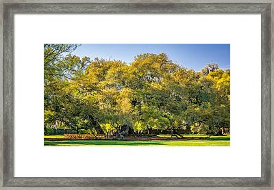 New Orleans - Tree Of Life 2 Framed Print by Steve Harrington