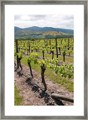New Zealand, South Island, Marlborough Framed Print by Lee Foster