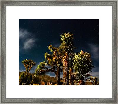 Night Desert Framed Print