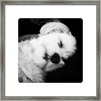 Nighty Night Framed Print by Natasha Marco