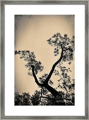 No Title 2 Framed Print