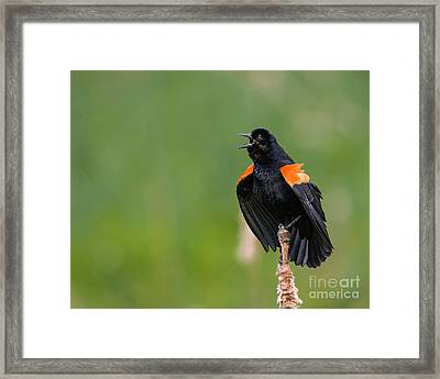 Framed Print featuring the photograph Noisemaker by Dale Nelson
