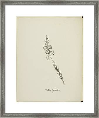 Nonsense Botany Collection By Edward Lear Framed Print by British Library