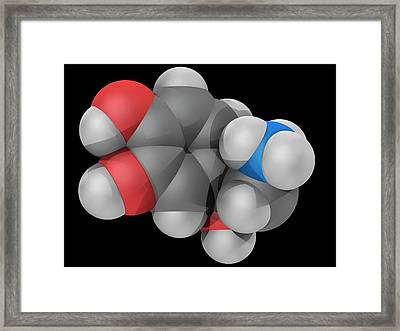 Norepinephrine Molecule Framed Print by Laguna Design/science Photo Library