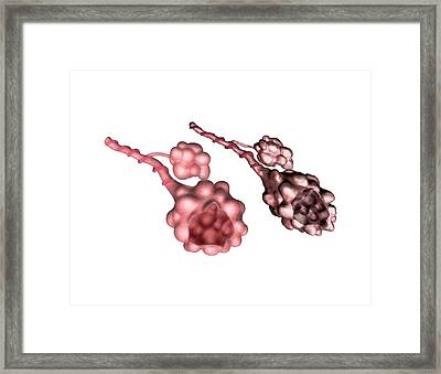 Normal And Emphysemic Alveoli Framed Print