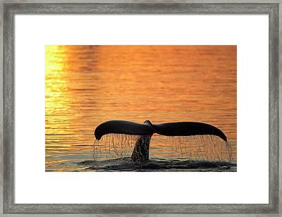 North America, Usa, Alaska Framed Print