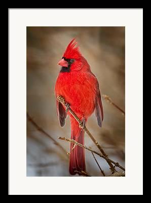 Connecticut Wildlife Framed Prints