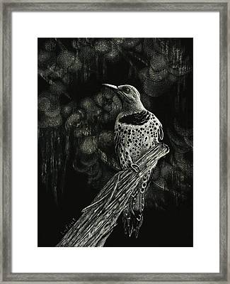 Northern Flicker Framed Print by Sandra LaFaut
