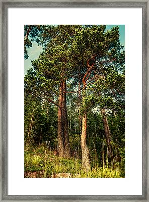 Northern Forest  Framed Print by Jenny Rainbow