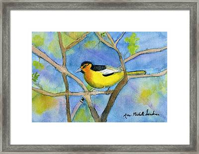 Northern Oriole Framed Print