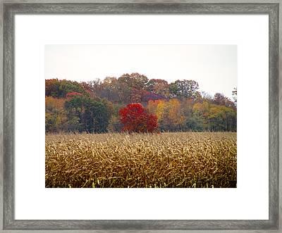 November Framed Print by Andrea Dale