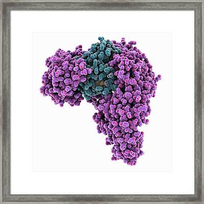 Nuclear Import Complex Molecule Framed Print by Laguna Design