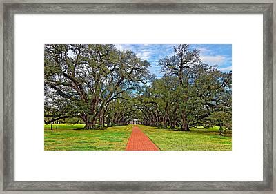 Oak Alley 3 Framed Print by Steve Harrington