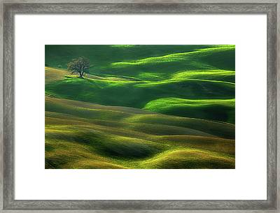 Oak... Framed Print