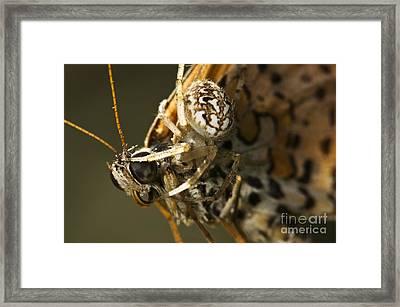 Oak Spider And Prey Framed Print