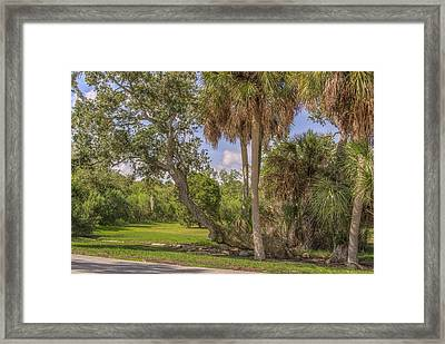 Framed Print featuring the photograph Oak Trees by Jane Luxton